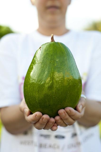 biggest. avocado. ever.