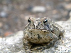 """Toad"" (John C. Akers jr.) Tags: its that toad easy  photocontesttnc10"