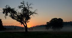 Sonnenaufgang - Feliz cumpleaños Jasmin :-) (El@_56) Tags: sky sunrise licht nebel feld wiese himmel geburtstag jasmin fields sonnenaufgang sommermorgen silhouetten bej naturewatcher pentaxk200d spectacularsunsetsandsunrises updatecollection ucreleased
