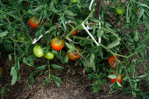 Maters1_2010