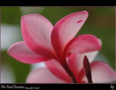 The Final Emotion (kgorka) Tags: color luz canon mexico flor kata colima manzanillo petalos sigma105 eos7d gorkabarreras