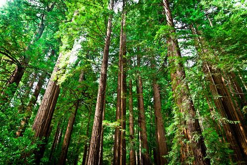 フリー写真素材, 自然・風景, 森林, 樹木, アメリカ合衆国,