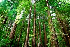 [フリー画像] 自然・風景, 森林, 樹木, アメリカ合衆国, 201008301900