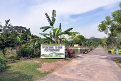 Weclome to our playground! (Charlie.Tan) Tags: nikon singapore tokina bollywood veggies 1224 d90 neotiew