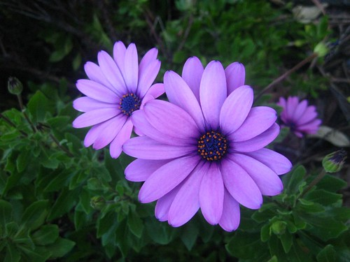 Newcastle Flowers