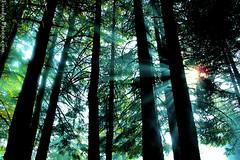 Rays Of Forest (A.alFoudry) Tags: world travel trees light summer vacation sun mountain tree forest canon turkey landscape asia ray power shot smoke powershot grill photograph rays kuwait borsa 2009 kuwaiti q8 abdullah kuw g10 q80 تركيا xnuzha alfoudry abdullahalfoudry foudryphotocom بورصه powershotg10