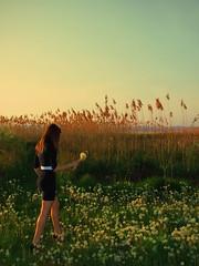 Pitypangok közt (Tommmysun) Tags: summer lake cute nature girl grass ball reeds model pretty retro dandelion crossprocessing fujifilm eszter balaton blowball pitypang zöld nyár eszti fű gyermekláncfű nádas s6500fd fujifilms6500fd kereszthívás tommmysun
