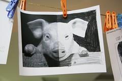 my pig symmetry