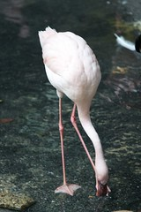MNZoo 555 (tfangel) Tags: animals zoo minnesotazoo tropicstrail