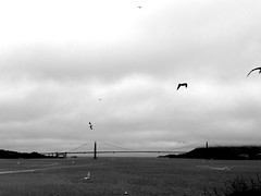 Golden Gate Bridge (fede_gen88) Tags: ocean sanfrancisco california bridge blackandwhite usa seagulls water birds fog clouds america island bay us unitedstates pacific cloudy foggy goldengate alcatraz