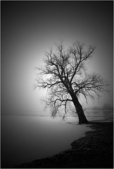 [ the alder ] (panfot_O) Tags: longexposure winter blackandwhite bw lake snow tree ice water landscape one fineart minimal shore lonely minimalism schwarzweiss solitary alder waterscape moochrome waterspace