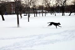 BlizzRad(!) in Humboldt Park (Josh Koonce) Tags: winter snow chicago dogs weather canon eos rebel 50mm illinois blizzard humboldtpark eosrebel groundhogday 500d dogsinsnow 2011 ef50mm fenruary bigblizzard t1i canoneosrebelt1i groundhogdayblizzard2011 groundhogdayblizzard
