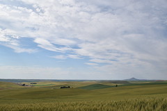 Steptoe (WilBDow) Tags: vast scenic palouse outdors farm fields steptoe butte landscape sweeping hills rolling wheat sky big washington rural housing solitude alone lone mountain
