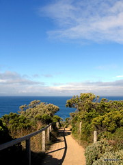 To the Ocean (williamnyk) Tags: greatoceanroad
