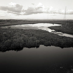 wetlands (Tony Kearney) Tags: reflections wetlands tmax100 samphire aftersunset homedeveloped ironmen blackwhitephotos muttoncove autaut lefevrepeninsula 38mmbiogon homescanned hasselbladswa nearthemouthoftheportriver