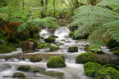 Cement Creek cascades, Yarra Ranges National Park, Victoria (98octane) Tags: longexposure mountain cold fern green wet water creek river waterfall nationalpark moss rainforest gallery australia victoria valley eucalypt yarra lush cascade warburton mountainash yarraranges acheron mtdonnabuang donnabuang acheronway