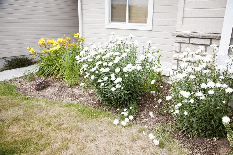 Idaho Flowers