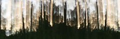forest-abstract-mirror-stitch