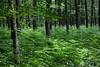 Wald-Bilder (MichaelSanderDU) Tags: wood trees tree green nature forest germany landscape deutschland natur du ms nrw summertime duisburg refreshing wald ruhrgebiet revier sander msimpressionen michaelsander duisburgmülheim michaelsanderdu michaelsanderfotografie michaelsanderfoto fotografiemichaelsander