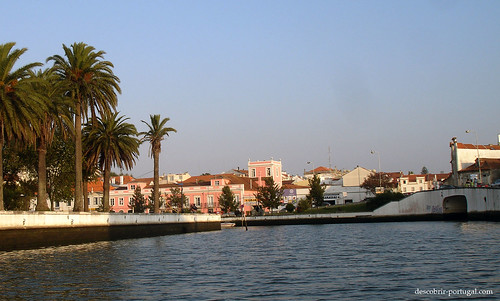 Palms and channel