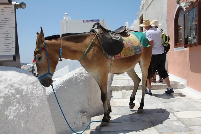 Mule-driver