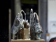 Mechelen - Ijzerenleen (Rick & Bart) Tags: sculpture fish water fountain sculptuur waterdrops vis mechelen smrgsbord fontein vlaanderen inspiredbylove jplaenen botg rickbart rickvink