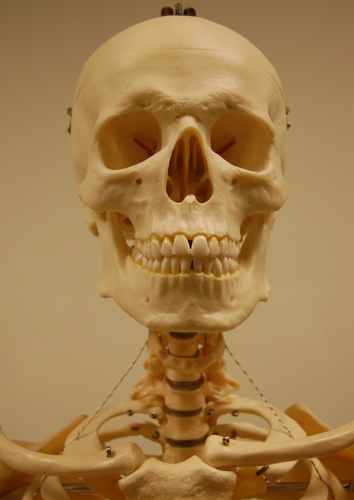 The World's Best Photos of hyoid - Flickr Hive Mind