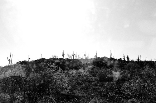 beeline highway saguaros (1 of 3)