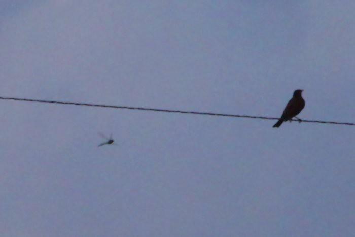 07-07-birdonawire2