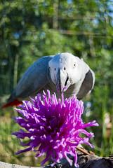 _DSC5318 (SNAKY34) Tags: nature vol bec animaux oiseau oiseaux plume snaky34