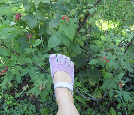 Raspberry Patch