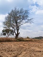 Imagen 24 (cguevara_aguilar) Tags: cielo árbol nube ‡rbol rbol cerrozapotecas
