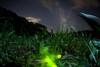 Firefly which looks at Milky Way (masahiro miyasaka) Tags: summer japan night canon stars wonder iso3200 star fisheye astrophotography 日本 firefly oneshot milkyway 夜 宇宙 银河 earthandsky 星 sigma15mmf28exdgfisheye eos5dmarkⅱ