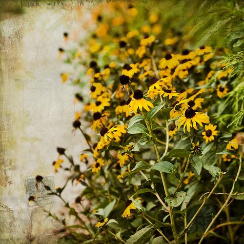 197/365 flower power