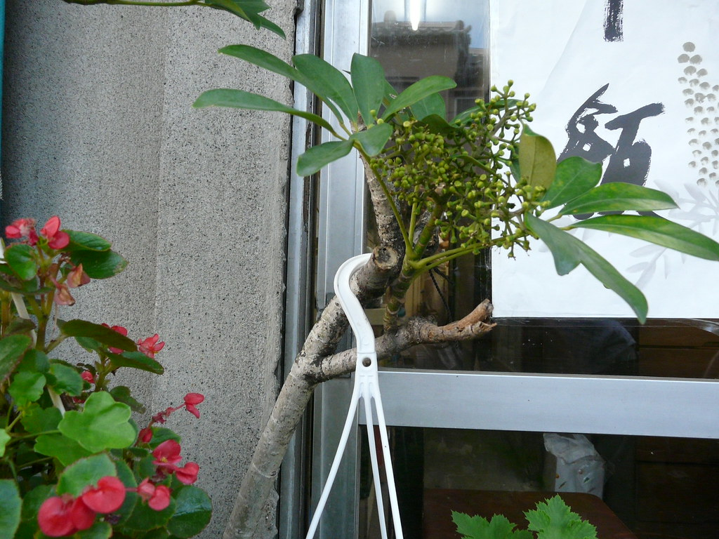 Tree Branch Hanging Pots