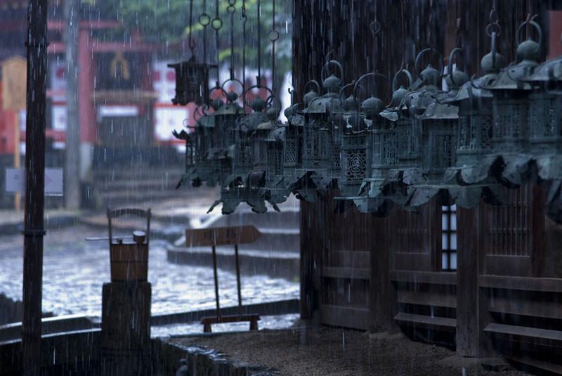 Kasuga Taisha of rain