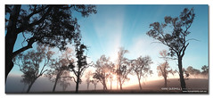 The Light Caster ([ Kane ]) Tags: blue trees light sky mist fog dark landscape photography dawn rays aged kane gledhill sillioutte kanegledhill wwwhumanhabitscomau kanegledhillphotography