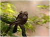 Chatters!!! (Naseer Ommer) Tags: india canon kerala sevensisters babbler marayoor naseerommer canon300mm chinnarwildlifesanctuary canoneos7d dpintl discoverplanetinternational