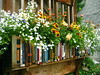 I NEED 3 of These ! (AGA~mum) Tags: flowerboxes windowboxes nhssustainablesouthwhidbeyisland bookwindowboxes
