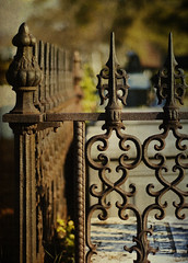 Springwood Iron Fence Painterly Texture