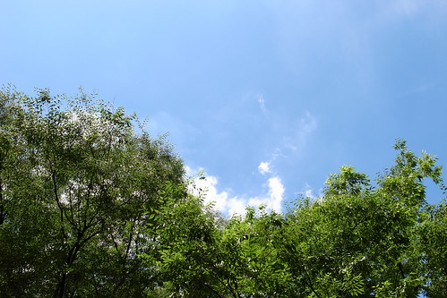 夏が来た日 2