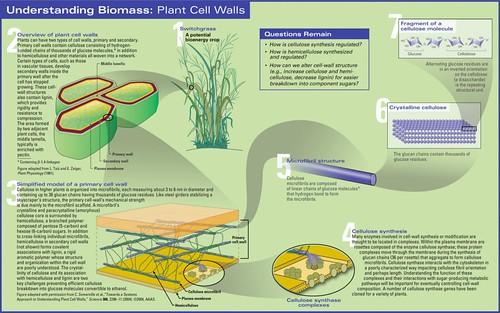 Biomass-Chemistry