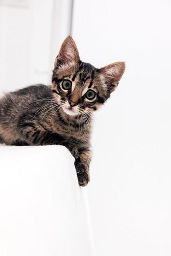 フリー写真素材, 哺乳類, ネコ科, 猫・ネコ, 子猫・小猫,