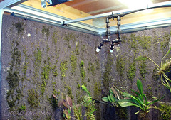 Orchid cool vivarium - drip system modification