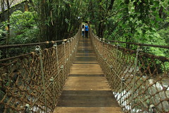 Together is Bliss (WanderingPixel) Tags: mountain hill kerala monsoon wayanad rains ghats