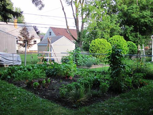 2010 Garden: Week 8