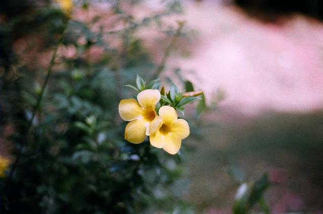 Bunga Bukan Sekuntum