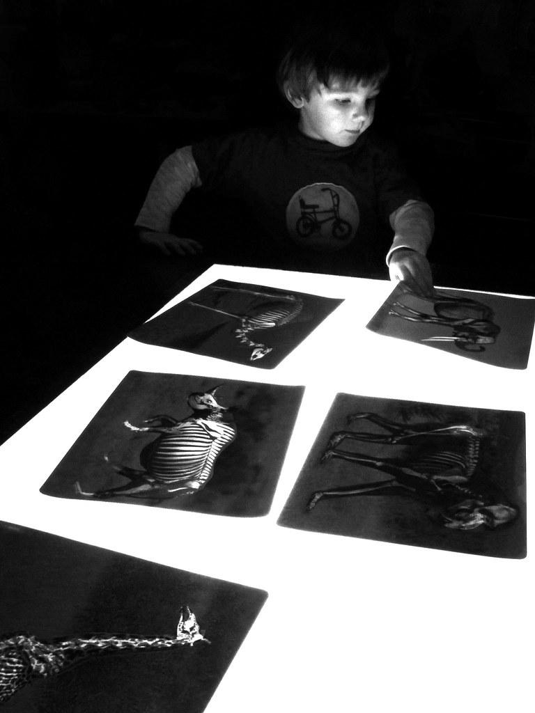 examining animal xrays
