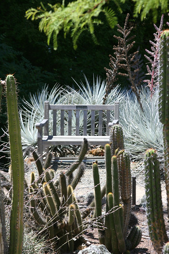 prickly seat