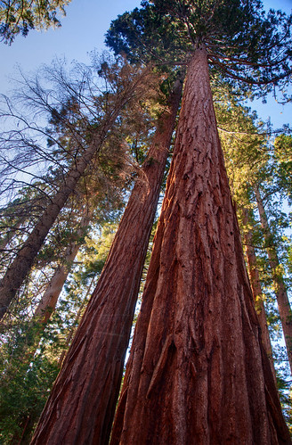 Sequoia National Park 14